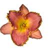 meridian-gardens-lilies-45