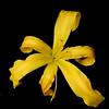 meridian-gardens-lilies-09