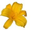 meridian-gardens-lilies-53