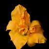 meridian-gardens-lilies-10