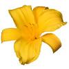 meridian-gardens-lilies-52