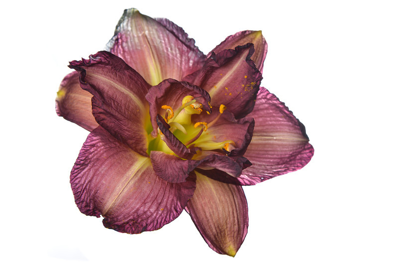 meridian-gardens-lilies-40