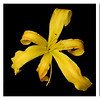 meridian-gardens-lilies-collage-04