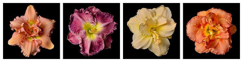 meridian-gardens-lilies-collage-05