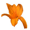 meridian-gardens-lilies-50