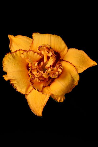 meridian-gardens-lilies-27