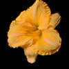 meridian-gardens-lilies-33