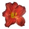meridian-gardens-lilies-42