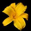 meridian-gardens-lilies-38
