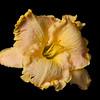 meridian-gardens-lilies-36