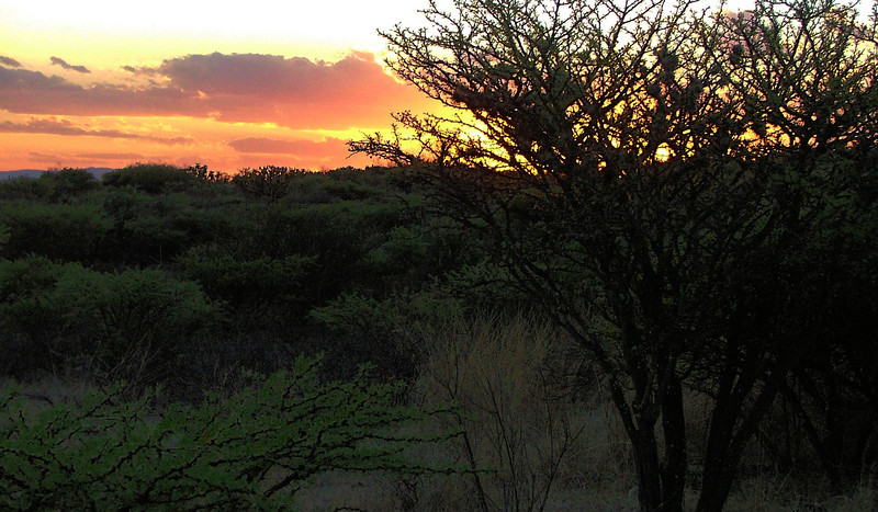 sunset over the acacia trees in the field
