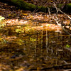 Mianus Gorge Preserve - Fall 2009 - Vernal Pool in October After Heavy Rain