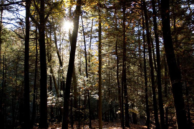 Mianus Gorge Preserve - Fall 2009 - Hemlock Forest