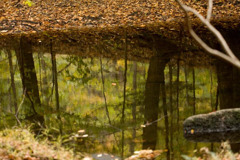 Mianus Gorge Preserve - Fall 2009 - Mianus River Reflection