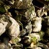 Mianus Gorge Preserve - Fall 2009 - Stone Wall