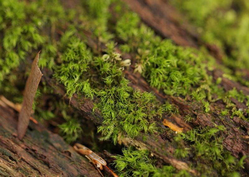 Sphagnum Moss on Decaying Log