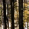 Mianus Gorge Preserve - Fall 2009