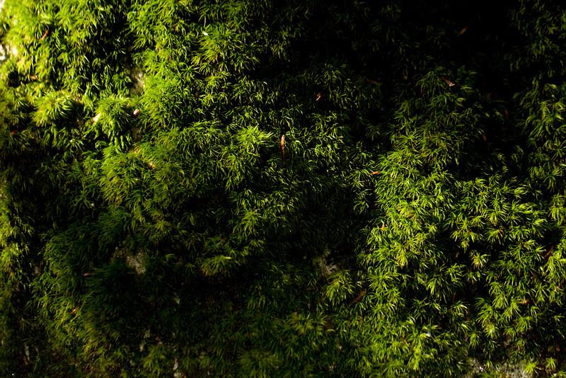 Mianus Gorge Preserve - Fall 2009 - Sphagnum Moss