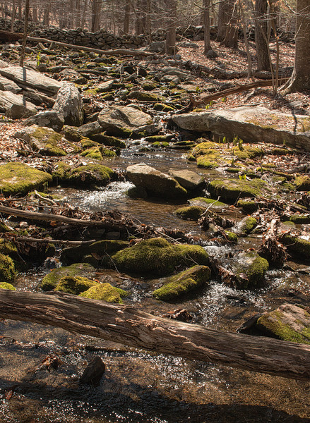 Stream tributary of Mianus River, April, 2014  (Voightlander 28mm pancake lens and on-camera fill flash)
