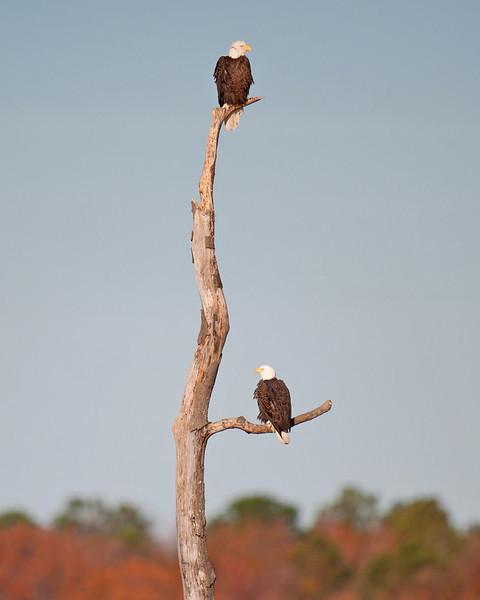 Eagle Lookouts
