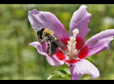 pollen  heaven )