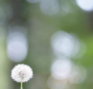 simplicity as a rule of thumb - original
