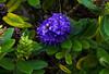 flower_GCM4419