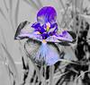 flower1_GCM4446