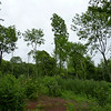Middenbos Schaelsberg 2de jaar na kap