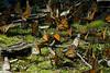 butterflies09_1