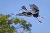 Migratory Wading Birds 2012 :