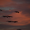 Pelicans at Sunrise-Cresent Beach