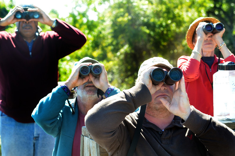 Birders watch for migrating raptors at the  Militia Hiil Hawk Watch in Fort Washington State Park.   (The Reporter/Geoff Patton)