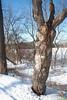 An odd-looking tree.
