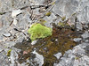 A small clump of moss near some algae where water was seeping out of the rock.