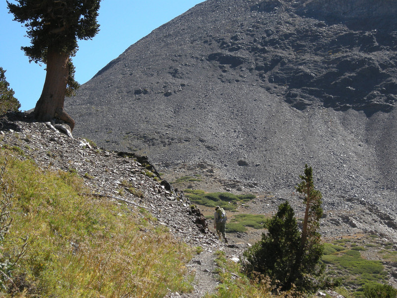 Approaching Farewell Gap, with the rocky treeless shoulder of Vandever Mountain beyond.