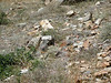 A plump marmot nestled among the rocks, trying to blend in.