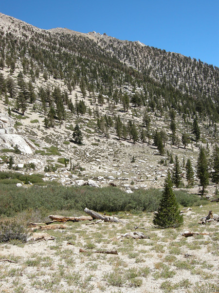 The slope that leads up to one of my favorite spots in the Sierra, Laurel Basin, a cross-country route that gains about 2000 feet from this point.