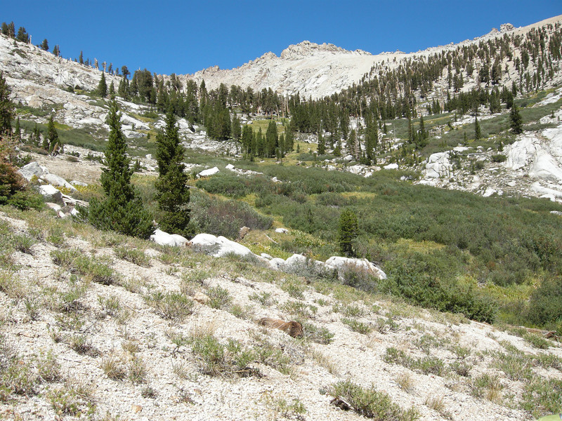 Looking up the Shotgun Creek drainage. Silver Lake is just beyond the trees, and Shotgun Pass is out of sight to the left.