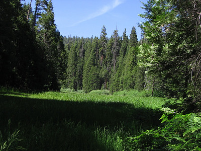 Lush and lonely Lower Bearpaw Meadow; it showed little evidence of use.