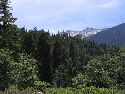 Looking back south towards where I had come from. The dark conifers with the rounded tops are Giant Sequoias, whereas other pointed-topped conifers are various species of pine and fir.