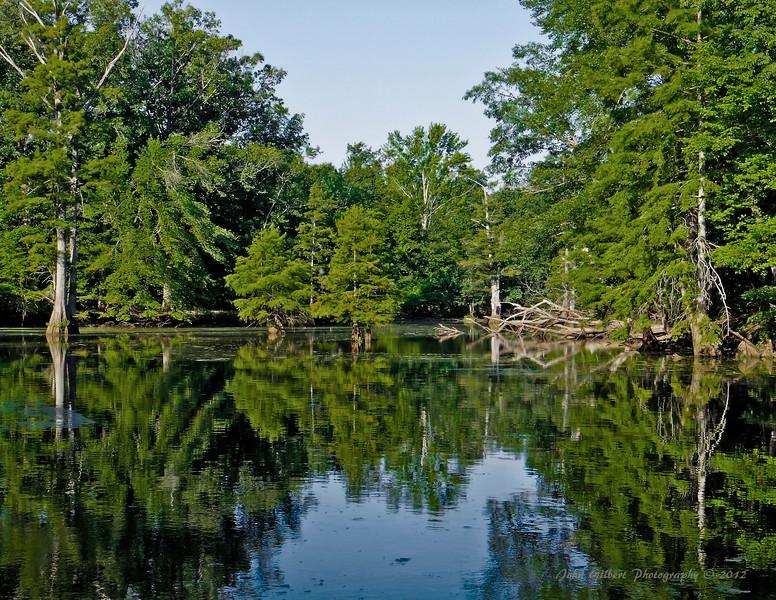 Mingo Wetlands #2