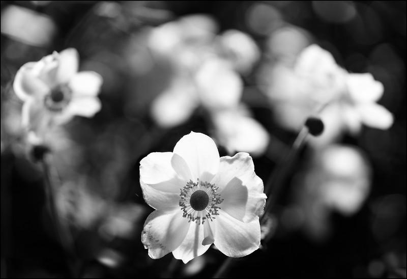 f2.8BG, f7.1 central flower.