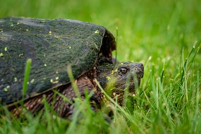Big Turtle 2020-05-22-0014