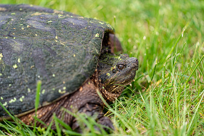 Big Turtle 2020-05-22-0010