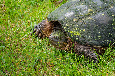 Big Turtle 2020-05-22-0006