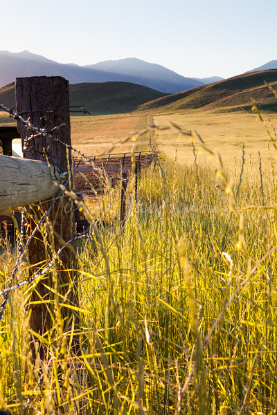South end of Cache Valley, Fence line