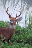 DSC_0040 Buck 4x6 best