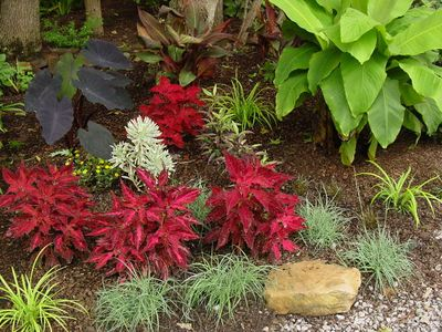 Planting by Robert... Cool textures