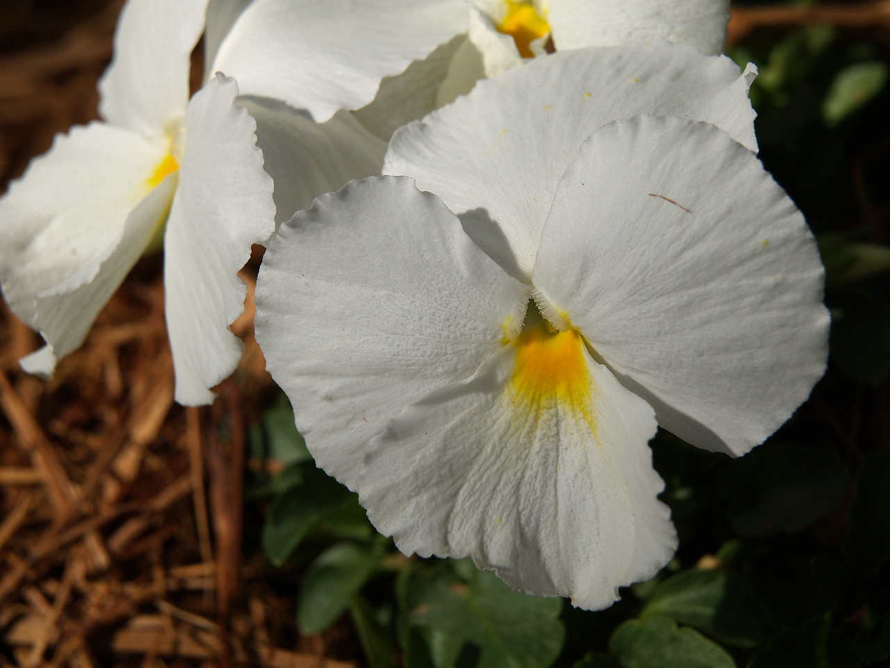 Dallas Arboretum, March 10, 2007